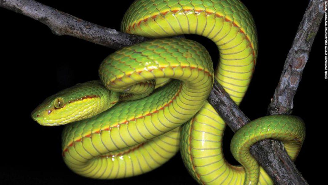 Открыт новый вид змей, получивший имя в честь Салазара Слизерина из